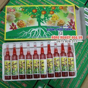 Thuốc giâm chiết cành Minh Đức hộp 10 ống – T3