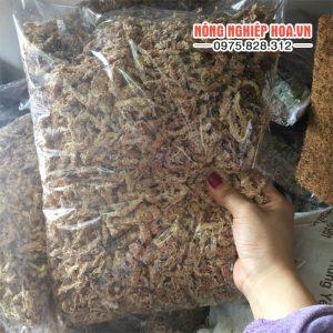 Rêu sâu Chi Lê ghép lai hiệu quả 0,5kg/gói GT24